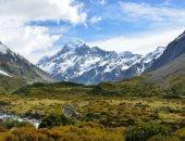 لماذا انقرضت الطيور المغردة فى نيوزيلندا؟