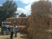 البيئة تجمع 1900 طن قش أرز وتحرير 5 محاضر المزارعين المخالفين