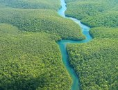 خبراء: زيادة استغلال الغابات فى أوروبا 49% يهدد خطط مكافحة أزمة المناخ