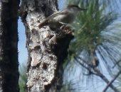 إعصار دوريان يؤثر على وجود نوع نادر من الطيور الاستوائية