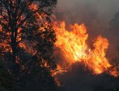 ساحل استراليا الشرقى يكافح حرائق الغابات.. وتدمير 21 منزلا
