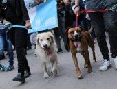 مدينة زامورا الإسبانية تفرض ضريبة بقيمة 9 يورو سنويا على اقتناء الكلاب