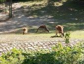 فيديو وصور.. شاهد لقطات نادرة لحديقة حيوان برلين
