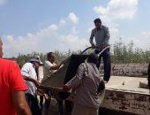 صور.. إيقاف أعمال مبانى مخالفة على أرض زراعية غرب الإسكندرية