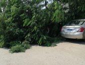 """""""محمود"""" يشارك بصور سقوط شجرة على السيارات بجوار دار الأوبرا المصرية"""