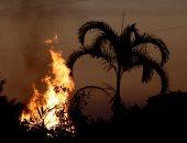 خبراء يحذرون من مستقبل حرائق الأمازون بسبب إزالة الغابات المتواصلة
