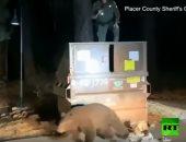 فيديو.. ضابط شرطة ينقذ دبًا من الموت حشر داخل صندوق