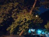 قارئ يشكو انتشار أشجار مائلة تعرض حياة المارة للخطر فى شوارع العجوزة