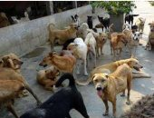 شكوى من انتشار الكلاب الضالة بقرية العطف بالعياط