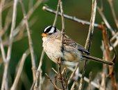 دراسة: المبيدات الحشرية تقتل الطيور وتعيق قدرتها على التكاثر والبقاء