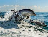 تحذيرات: الدلافين ببحر المانش تحتوى على مستويات عالية من الزئبق السام
