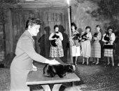 10 صور من اختبارات 152 قطة للمشاركة في فيلم Tales of Terror عام 1962