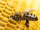 الزراعة تنظم دورة تدريبة حول كيفية إنشاء مناحل للعسل ومنتجاته