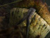 شاهد.. غواص يلتقط فيديو مذهل ومفصل لأناكوندا عملاق فى نهر بالبرازيل