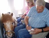 """بيعملوا إيه هنا؟!.. ديك وحصان وبطة على متن رحلات طيران أمريكية.. """" صور"""""""