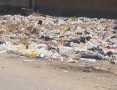 شكوى من تحول أرض فضاء بجوار جامعة المنيا لمقلب قمامة ومأوى للكلاب الضالة