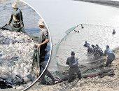 الزراعة: تنمية البحيرات ونهر النيل و20 مليون زريعة لأسماك البلطى والمبروك