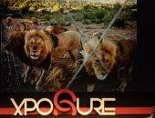صور.. كواليس الحياة البرية وأسرار صيد الأسود فى إفريقيا