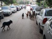 قارئ يشكو من انتشار الكلاب الضالة بمجاورة 53 بالعاشر من رمضان