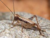 """""""هياكلوا حشرات"""".. هكذا سيتمكن البشر من النجاة على سطح المريخ"""