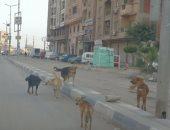 إصابة 7 أشخاص بينهم 3 أطفال عقرهم كلب مسعور ببسيون فى الغربية