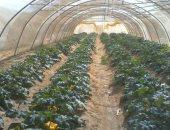 تعرف على مزارع وادى القويح بصحراء القصير × 7 معلومات