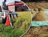 """""""الغرف التجارية"""": مساحات زراعة الأرز لن تكفى الاستهلاك ونحتاج للاستيراد"""