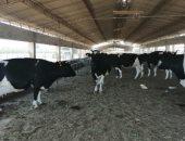 محافظ أسيوط: شراء 24 رأس جاموسى لتطوير مزرعة بنى مر لإنتاج الألبان واللحوم