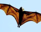 رغم  كورونا.. أسواق تبيع الخفافيش والثعابين والكلاب مازالت تعمل بجنوب شرق آسيا