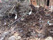 قارئ يشكو تراكم القمامة بجانب ترعة كفر منصور فى كفر شكر بالقليوبية