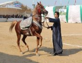 صور.. قصة مهرجان الشرقية للخيول العربية فى دورته الـ24 .. تعرف عليها