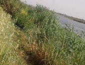 أهالى جزيرة محمد بأسيوط يناشدون المسئولين بتدبيش الجزء المتبقى من شط النيل