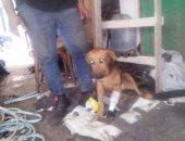 """""""إنسانية بلا حدود"""".. صاحب ورشة خراطة بدمياط يصنع قدما صناعية لكلب بترت ساقه..فيديو"""