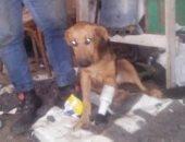 موجز المحافظات.. صاحب ورشة خراطة بدمياط يصنع قدما صناعية لكلب بترت ساقه