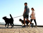 فسح كلبك.. CNN: غرامة 2700 دولار عقوبة مانع كلبه من المشى يوميا بأستراليا