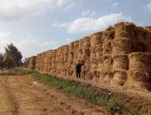 وزارتا البيئة والزراعة تتابعان منظومة جمع وتدوير قش الأرز بالبحيرة