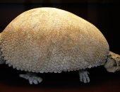 شاهد.. العثور على جزء من حيوان أخدودى الأسنان عمره 10 آلاف سنة فى الأرجنتين