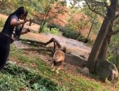 سيدة دخلت لمنطقة الأسد فى حديقة حيوانات.. شاهد ماذا حدث لها.. فيديو وصور