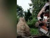 مقتل فيل بعد حادث مأساوى ..صدمه قطار في الهند ..فيديو