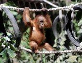 تقرير يحذر: خمس أنواع الحيوانات معرضة للانقراض بسبب تداولها فى الأسواق