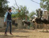"""أصغر بيزنس مان.. يوسف """"17 عاما"""" يحلم بالمليون فى مزرعة النعام"""