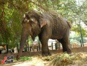 """صور لـ """"نعيمة"""" آخر أفيال حديقة حيوان الجيزة قبل نفوقها بجلطة فى القلب"""