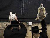 """صور.. 10 معلومات عن طقوس """"عيد الغفران"""" أبرزها وضع الدواجن على الرأس"""