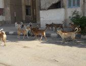 شكوى من انتشار الكلاب الضالة أمام مدرسة كفر اللبا بالشرقية