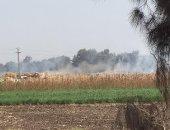 """استجابة لـ اليوم السابع.. """"البيئة"""" تحرر  محاضر للمخالفين بحرق قش الأرز بالمحلة"""