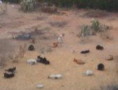 قارئ يشكو انتشار الكلاب الضالة مدينة 6 أكتوبر الحى الثانى مجاورة 8