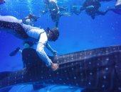 محميات البحر الأحمر: تلقينا بلاغات بمضايقات للقرش الحوتى وجارى ضبط مرتكبيها