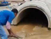 شاهد.. رجال الإنقاذ يمسكون بكوبرا تزن 15 كيلو فى تايلاند