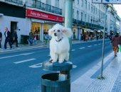 متخصص كلاب.. مسعف يقضى 40 عاما فى التقاط صور مذهلة للحيوانات