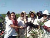 صور.. عضوات وفد اليونيدو يرسمن صورة جميلة لمزارعات جنى القطن بكفر الشيخ